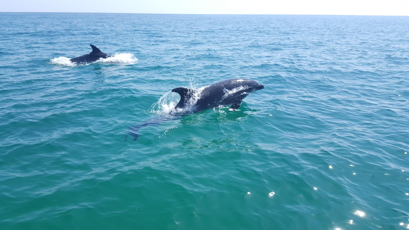 dolphins swimming together lagos